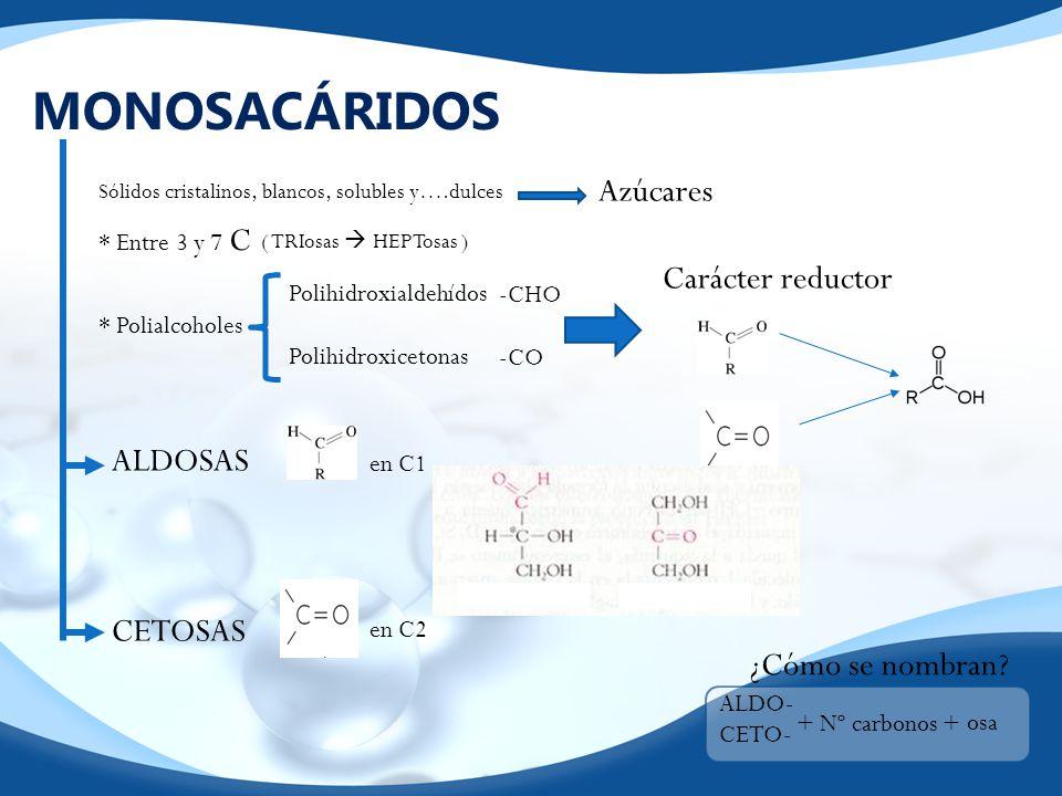 MONOSACÁRIDOS Sólidos cristalinos, blancos, solubles y….dulces Azúcares * Entre 3 y 7 C ( TRIosas HEPTosas ) * Polialcoholes Polihidroxialdehídos Poli