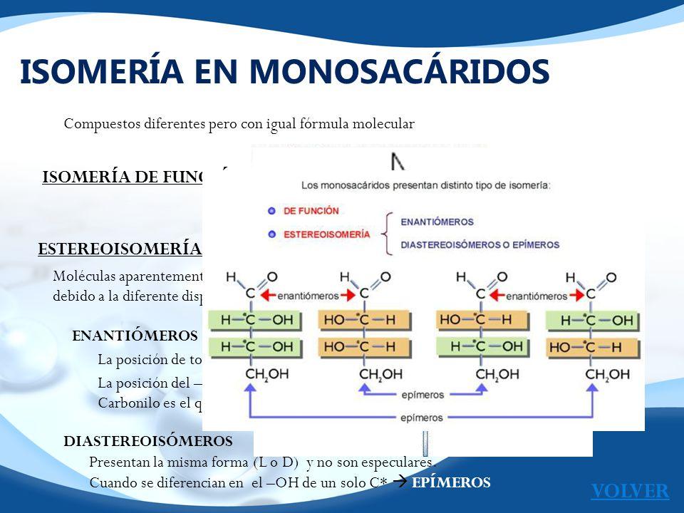 ACTIVIDAD OPTICA EN MONOSACÁRIDOS Gracias a los C* los monosacáridos pueden desviar el plano de un haz de luz polarizada cuando están en disolución.