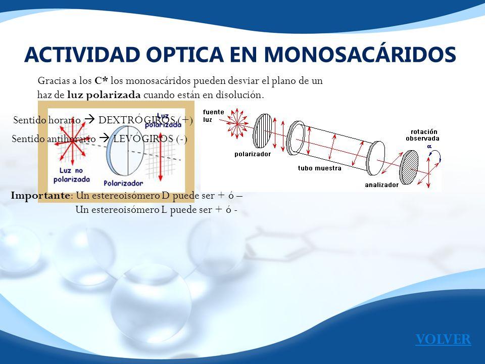 ACTIVIDAD OPTICA EN MONOSACÁRIDOS Gracias a los C* los monosacáridos pueden desviar el plano de un haz de luz polarizada cuando están en disolución. S