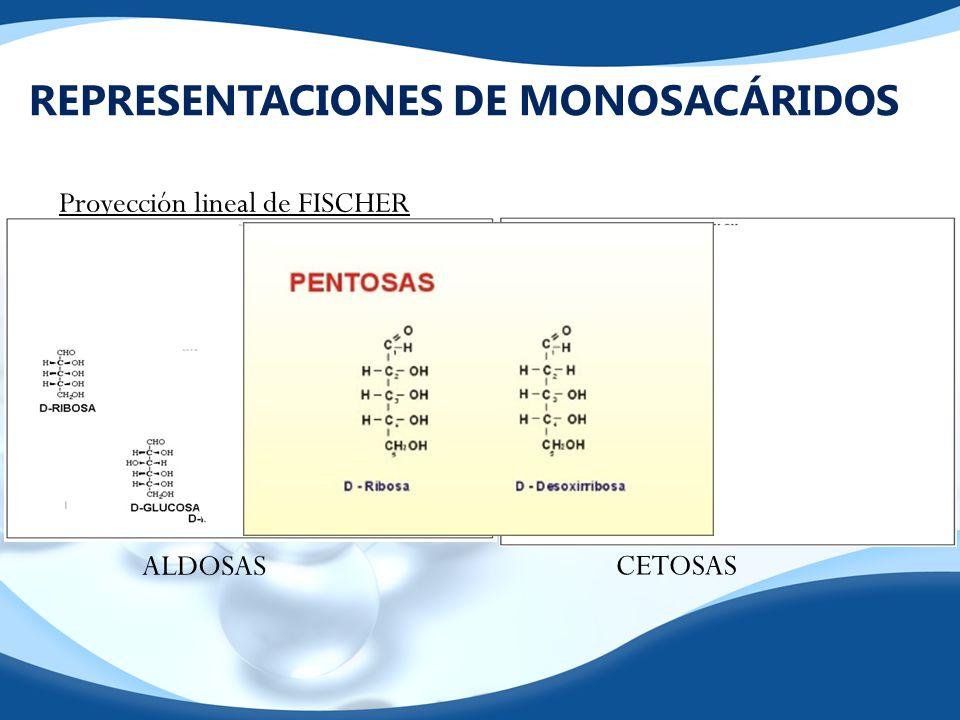 REPRESENTACIONES DE MONOSACÁRIDOS Proyección lineal de FISCHER ALDOSAS CETOSAS