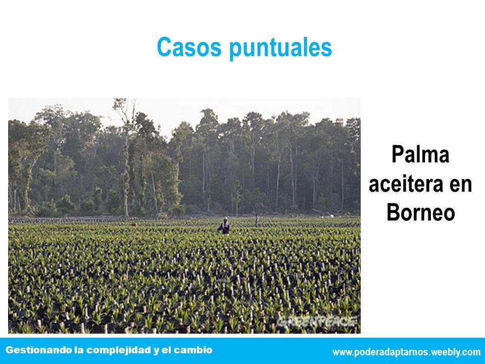 www.poderadaptarnos.weebly.com Gestionando la complejidad y el cambio Casos puntuales Palma aceitera en Borneo