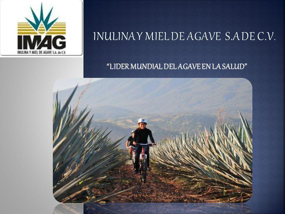 Somos una empresa productora de Inulina y Miel de Agave, 100% Mexicana, ubicada en Capilla de Guadalupe, en los Altos de Jalisco, zona reconocida por su producción de agave de alta calidad.