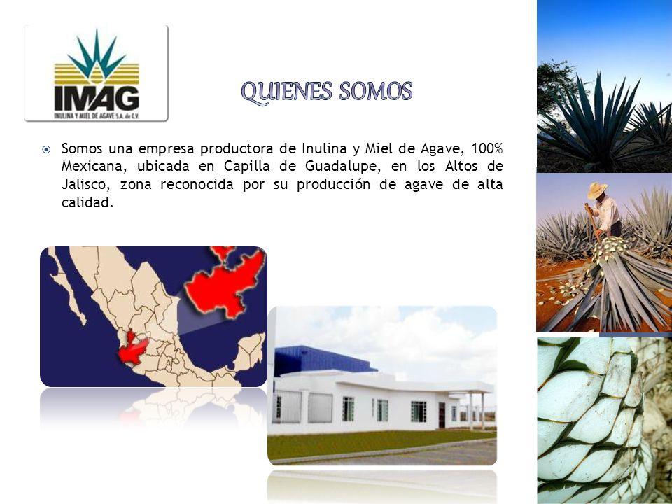 Somos una empresa productora de Inulina y Miel de Agave, 100% Mexicana, ubicada en Capilla de Guadalupe, en los Altos de Jalisco, zona reconocida por