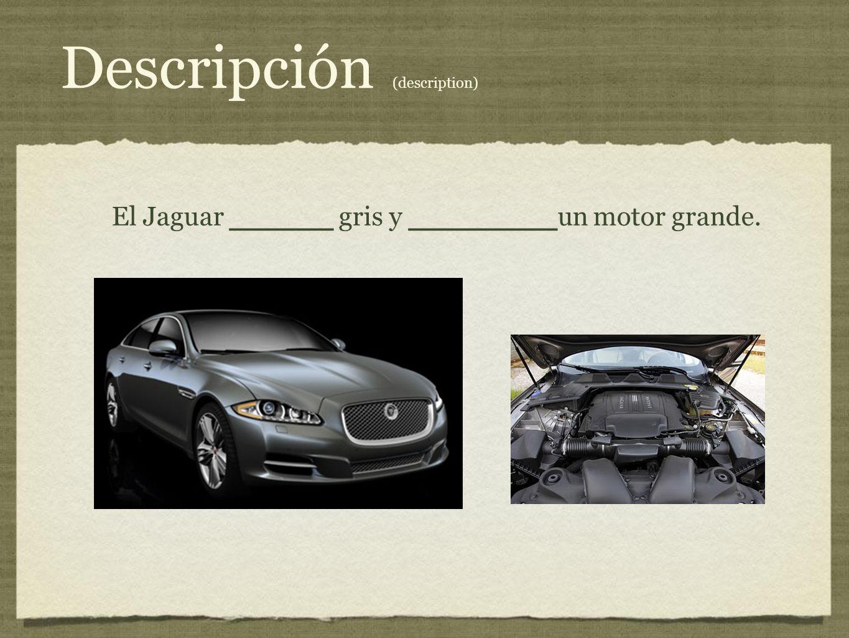 Descripción (description) El Jaguar _______ gris y __________ un motor grande.