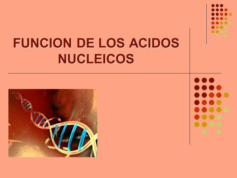 FUNCION DE LOS ACIDOS NUCLEICOS