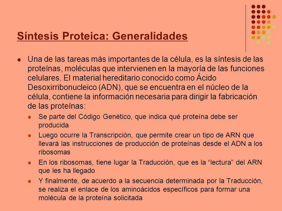 Síntesis Proteica: Generalidades Una de las tareas más importantes de la célula, es la síntesis de las proteínas, moléculas que intervienen en la mayoría de las funciones celulares.