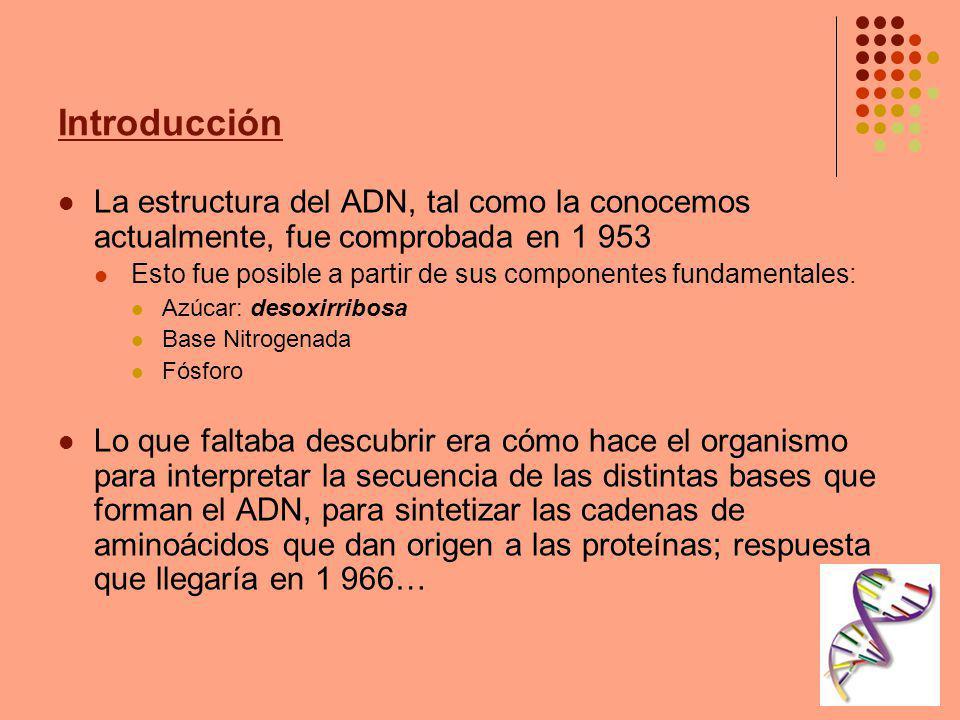 Introducción La estructura del ADN, tal como la conocemos actualmente, fue comprobada en 1 953 Esto fue posible a partir de sus componentes fundamenta