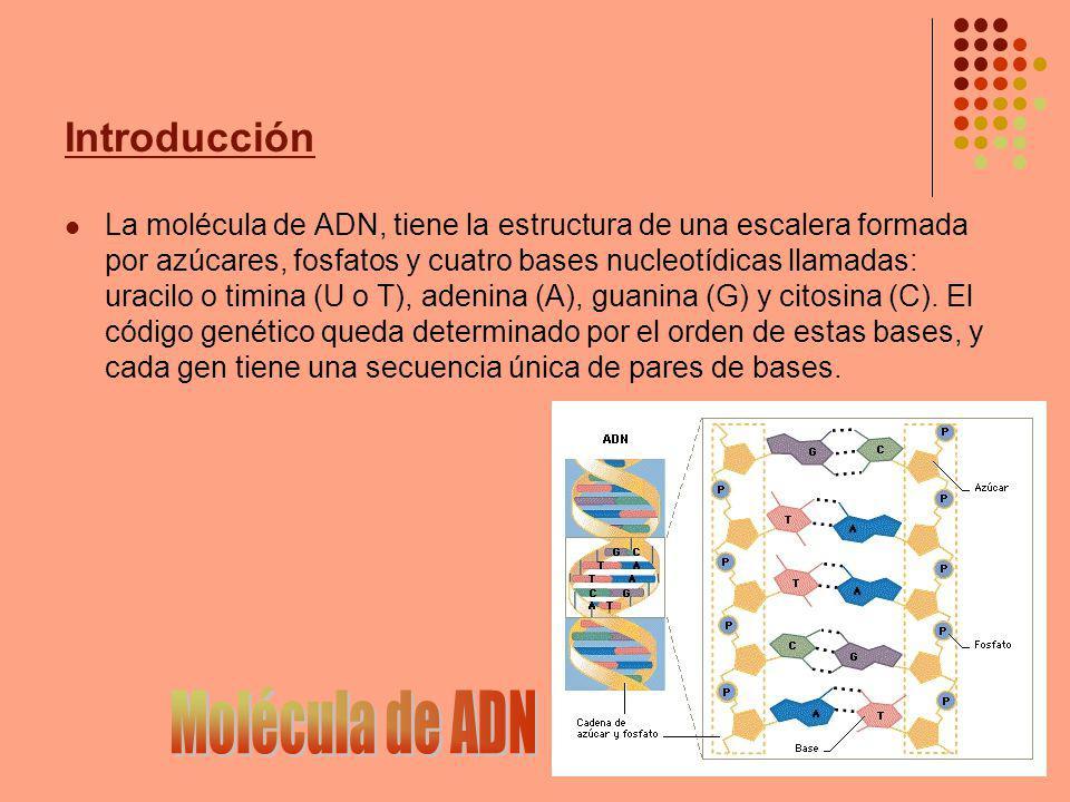 Introducción El ADN pues, ha resultado ser un lenguaje Es el lenguaje que le dice a la célula cómo hacer todas las proteínas que ésta necesita para llevar a cabo su función normal ¿Cómo.