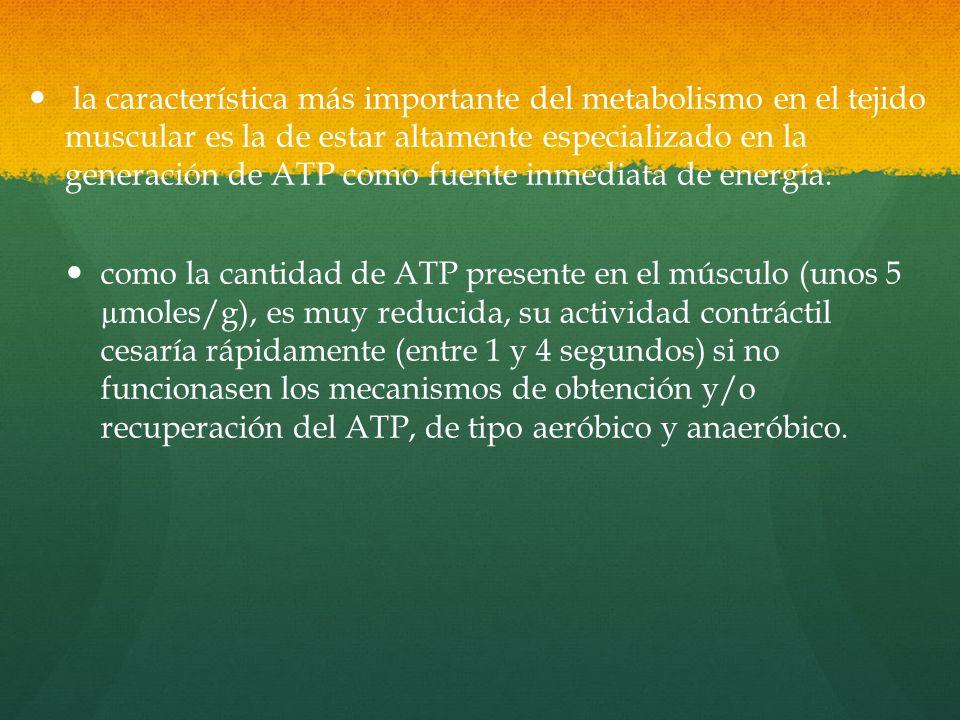 como la cantidad de ATP presente en el músculo (unos 5 µmoles/g), es muy reducida, su actividad contráctil cesaría rápidamente (entre 1 y 4 segundos) si no funcionasen los mecanismos de obtención y/o recuperación del ATP, de tipo aeróbico y anaeróbico.