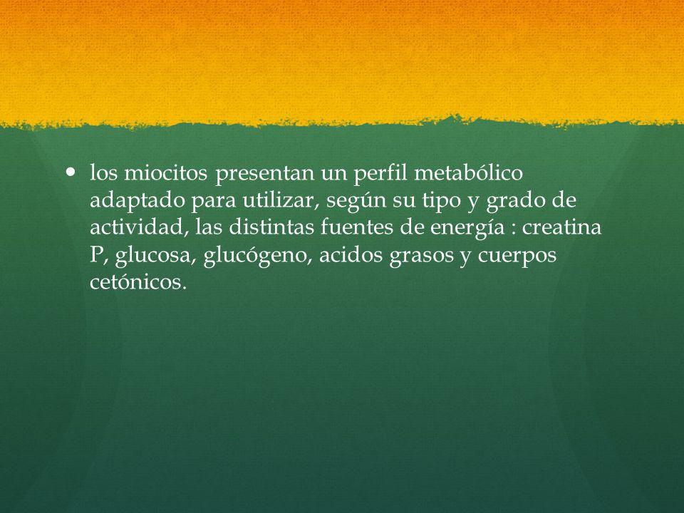 los miocitos presentan un perfil metabólico adaptado para utilizar, según su tipo y grado de actividad, las distintas fuentes de energía : creatina P, glucosa, glucógeno, acidos grasos y cuerpos cetónicos.