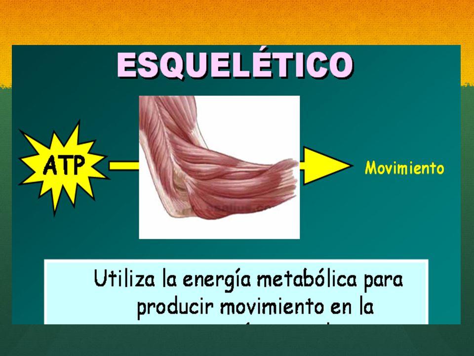 el tejido muscular, cuya masa en el organismo supone del 40% al 50% de su peso total, tiene como función principal, transformar la energía química/ metabólica (como ATP) en la energía mecánica que permite realizar un trabajo y producir movimiento (proceso de contracción y relajación alternante de los músculos) (proceso de contracción y relajación alternante de los músculos)