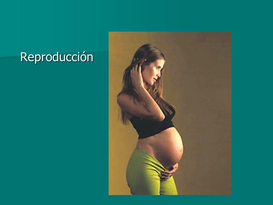 Reproducción Reproducción