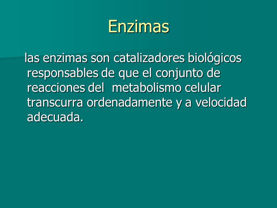 Enzimas las enzimas son catalizadores biológicos responsables de que el conjunto de reacciones del metabolismo celular transcurra ordenadamente y a velocidad adecuada.