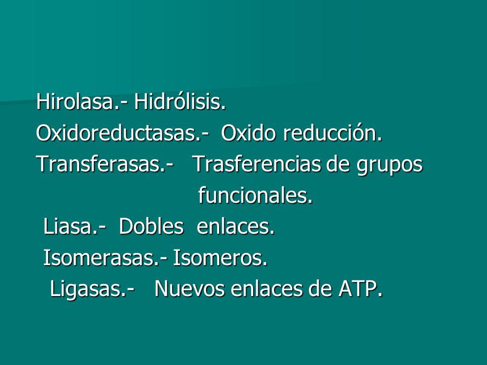 Hirolasa.- Hidrólisis.Hirolasa.- Hidrólisis. Oxidoreductasas.- Oxido reducción.