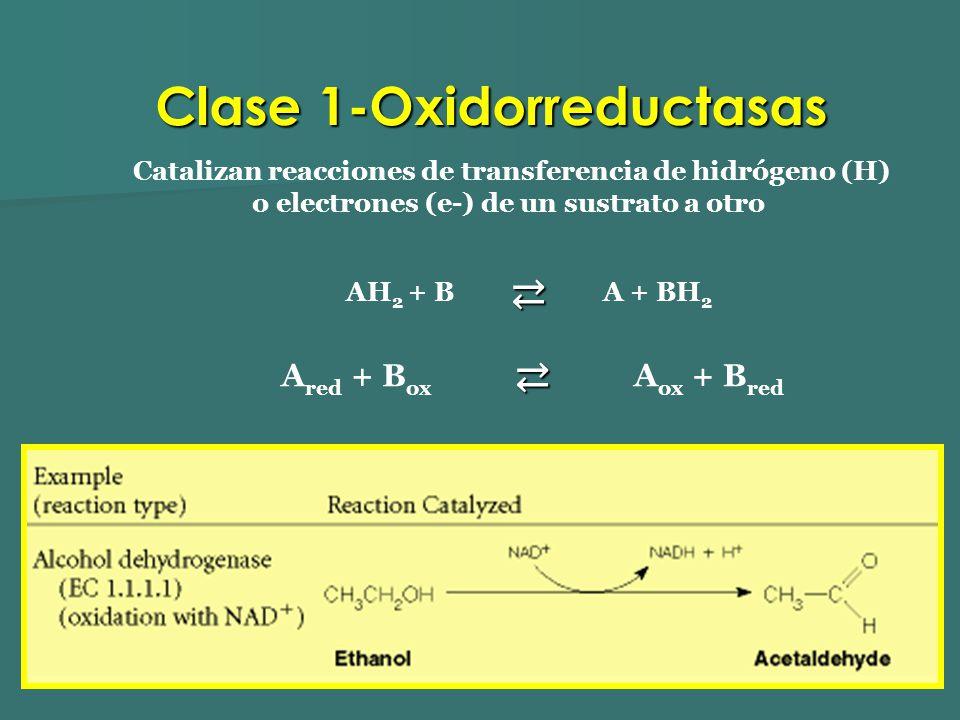 Catalizan reacciones de transferencia de hidrógeno (H) o electrones (e-) de un sustrato a otro AH 2 + B A + BH 2 A red + B ox A ox + B red Clase 1-Oxi
