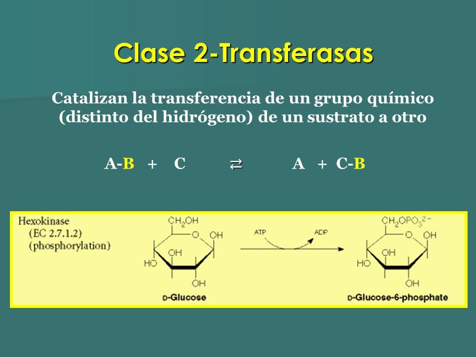 Catalizan la transferencia de un grupo químico (distinto del hidrógeno) de un sustrato a otro A-B + C A + C-B Clase 2-Transferasas