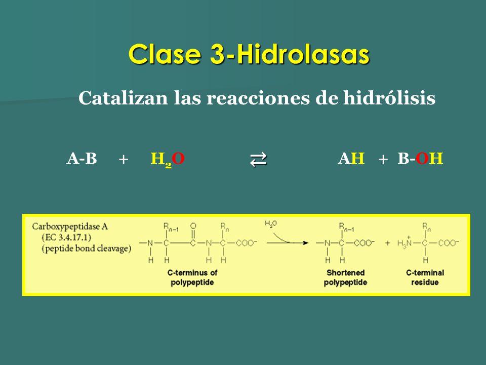 Catalizan las reacciones de hidrólisis A-B + H 2 O AH + B-OH Clase 3-Hidrolasas