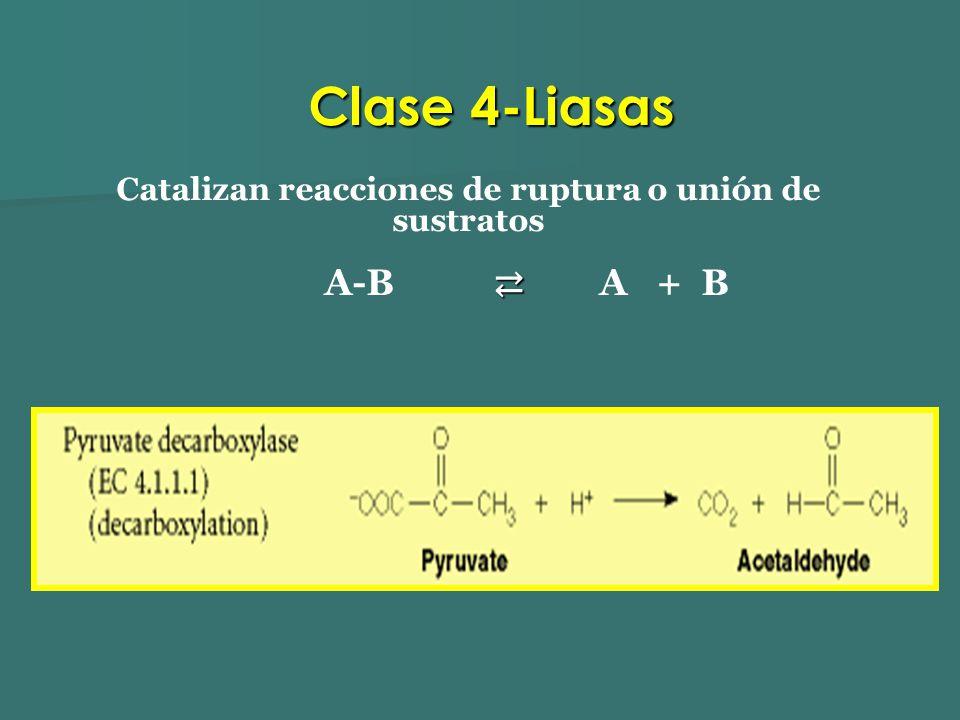 Catalizan reacciones de ruptura o unión de sustratos A-B A + B Clase 4-Liasas