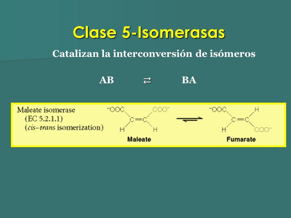 Catalizan la interconversión de isómeros AB BA Clase 5-Isomerasas