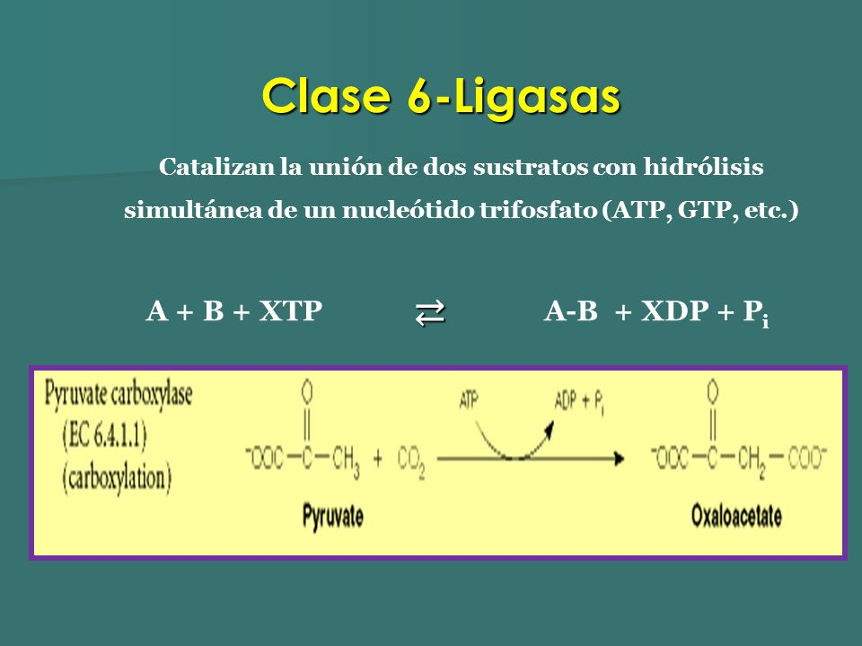 Catalizan la unión de dos sustratos con hidrólisis simultánea de un nucleótido trifosfato (ATP, GTP, etc.) A + B + XTP A-B + XDP + P i Clase 6-Ligasas