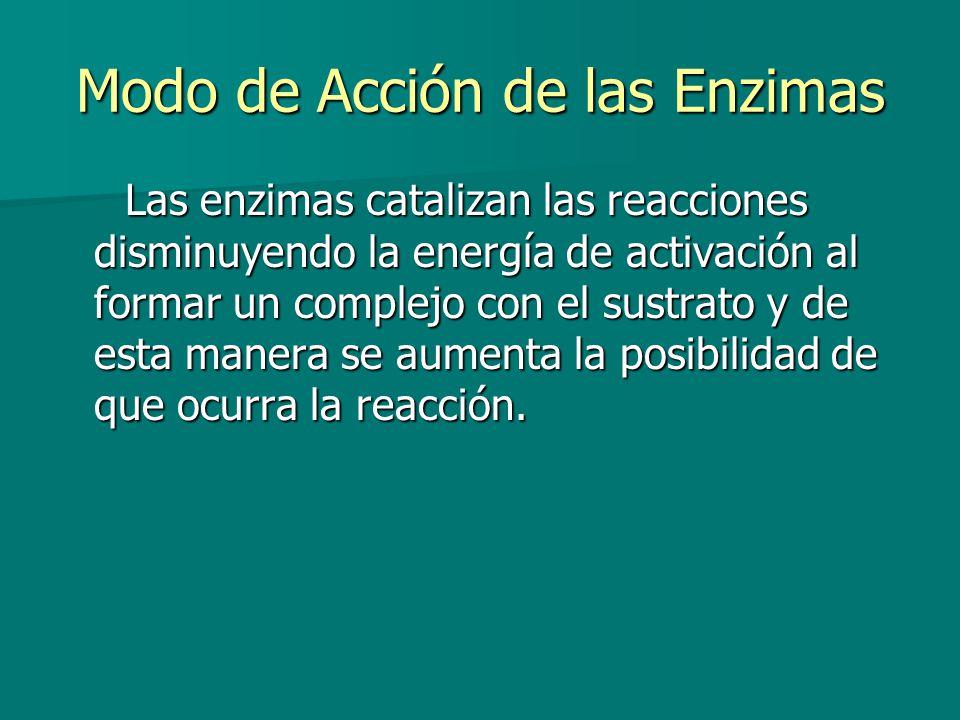 Modo de Acción de las Enzimas Las enzimas catalizan las reacciones disminuyendo la energía de activación al formar un complejo con el sustrato y de esta manera se aumenta la posibilidad de que ocurra la reacción.