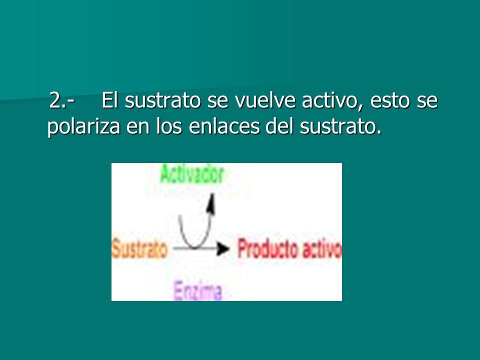 2.- El sustrato se vuelve activo, esto se polariza en los enlaces del sustrato. 2.- El sustrato se vuelve activo, esto se polariza en los enlaces del