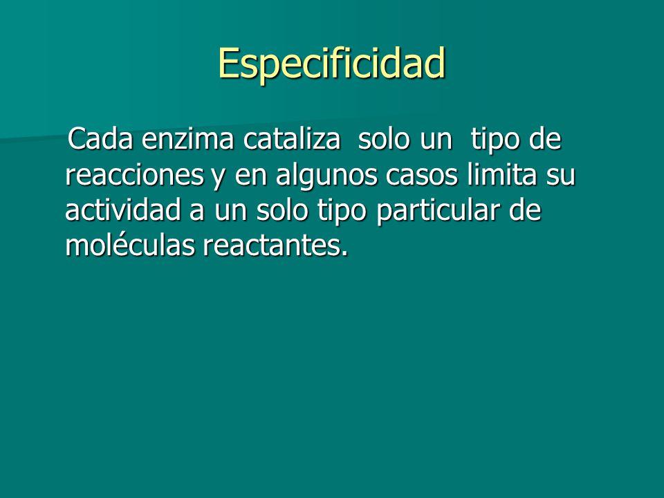 Especificidad Cada enzima cataliza solo un tipo de reacciones y en algunos casos limita su actividad a un solo tipo particular de moléculas reactantes