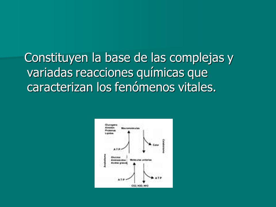 Constituyen la base de las complejas y variadas reacciones químicas que caracterizan los fenómenos vitales. Constituyen la base de las complejas y var