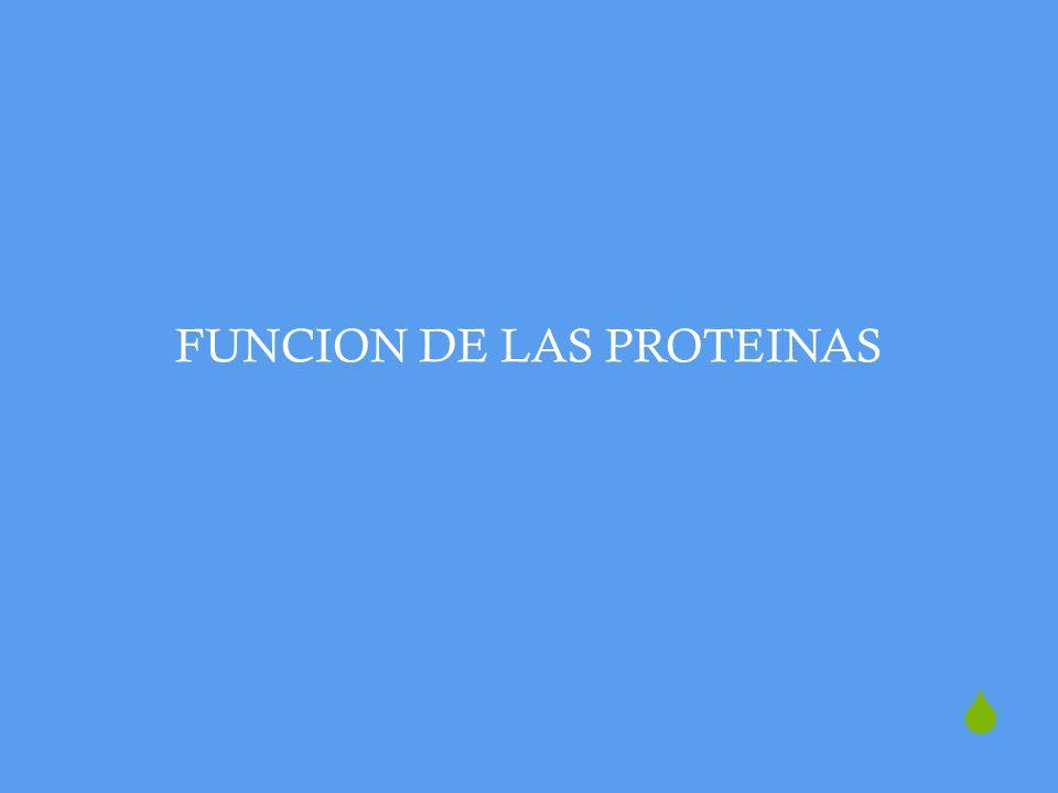 FUNCION DE LAS PROTEINAS