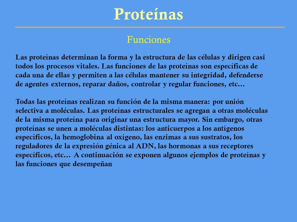 Proteínas Funciones Las proteínas determinan la forma y la estructura de las células y dirigen casi todos los procesos vitales. Las funciones de las p