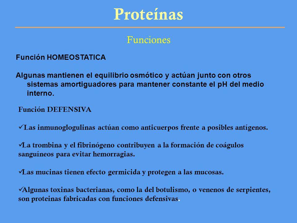 Proteínas Funciones Función HOMEOSTATICA Algunas mantienen el equilibrio osmótico y actúan junto con otros sistemas amortiguadores para mantener const