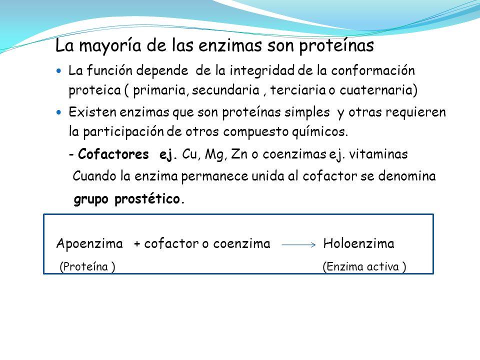 La mayoría de las enzimas son proteínas La función depende de la integridad de la conformación proteica ( primaria, secundaria, terciaria o cuaternari
