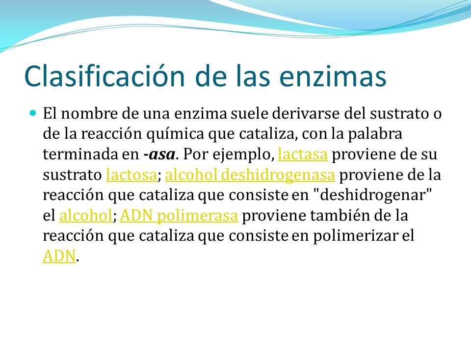 Clasificación de las enzimas El nombre de una enzima suele derivarse del sustrato o de la reacción química que cataliza, con la palabra terminada en -