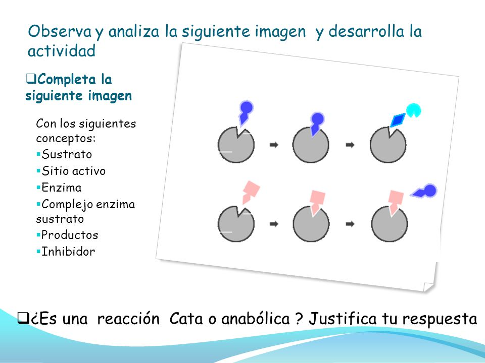 Completa la siguiente imagen Con los siguientes conceptos: Sustrato Sitio activo Enzima Complejo enzima sustrato Productos Inhibidor ¿Es una reacción Cata o anabólica .