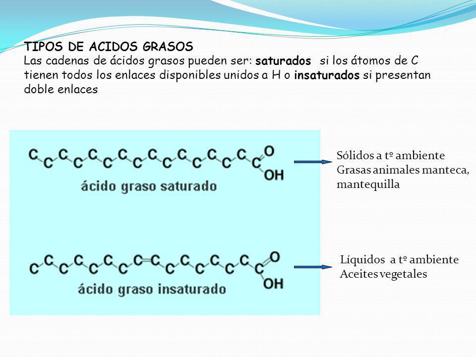 TIPOS DE ACIDOS GRASOS Las cadenas de ácidos grasos pueden ser: saturados si los átomos de C tienen todos los enlaces disponibles unidos a H o insatur