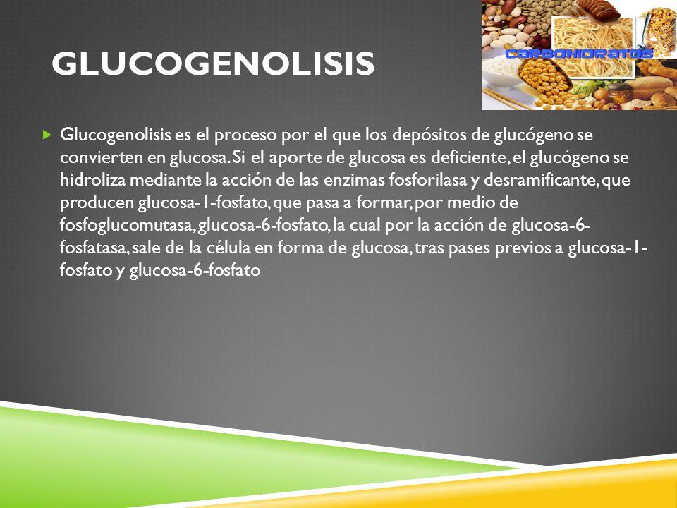 GLUCOGENOLISIS Glucogenolisis es el proceso por el que los depósitos de glucógeno se convierten en glucosa.