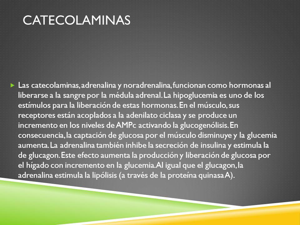 CATECOLAMINAS Las catecolaminas, adrenalina y noradrenalina, funcionan como hormonas al liberarse a la sangre por la médula adrenal.