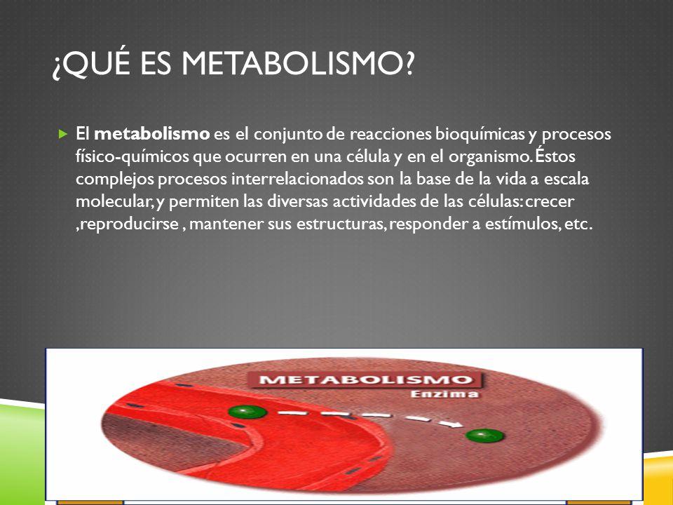 ACTIVIDADES Elabora un mapa conceptual del metabolismo de los hidratos de carbono.