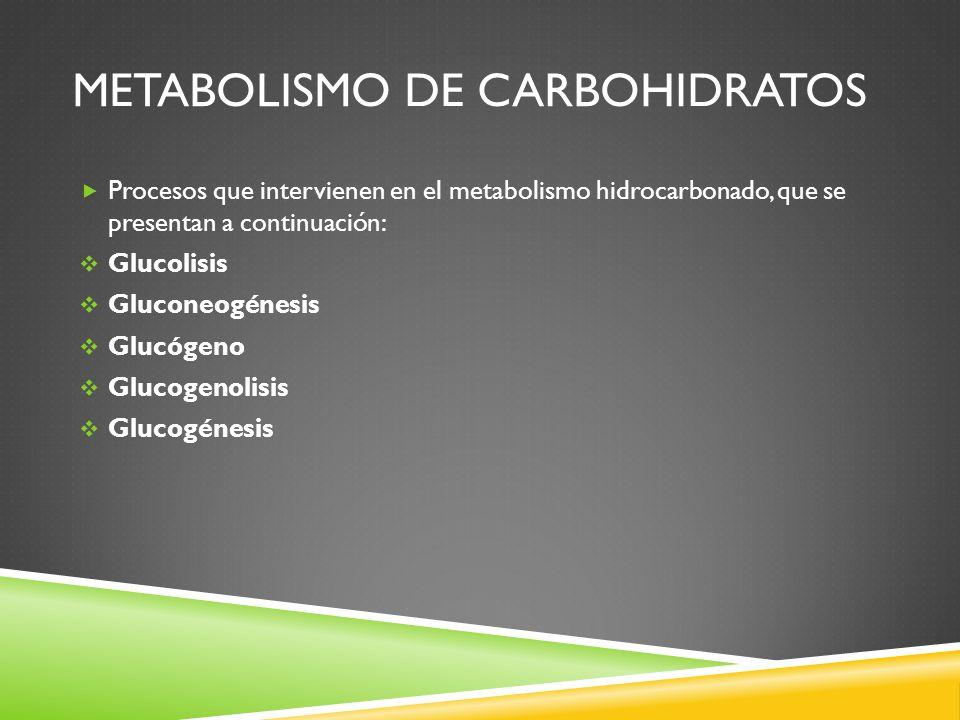 METABOLISMO DE CARBOHIDRATOS Procesos que intervienen en el metabolismo hidrocarbonado, que se presentan a continuación: Glucolisis Gluconeogénesis Glucógeno Glucogenolisis Glucogénesis