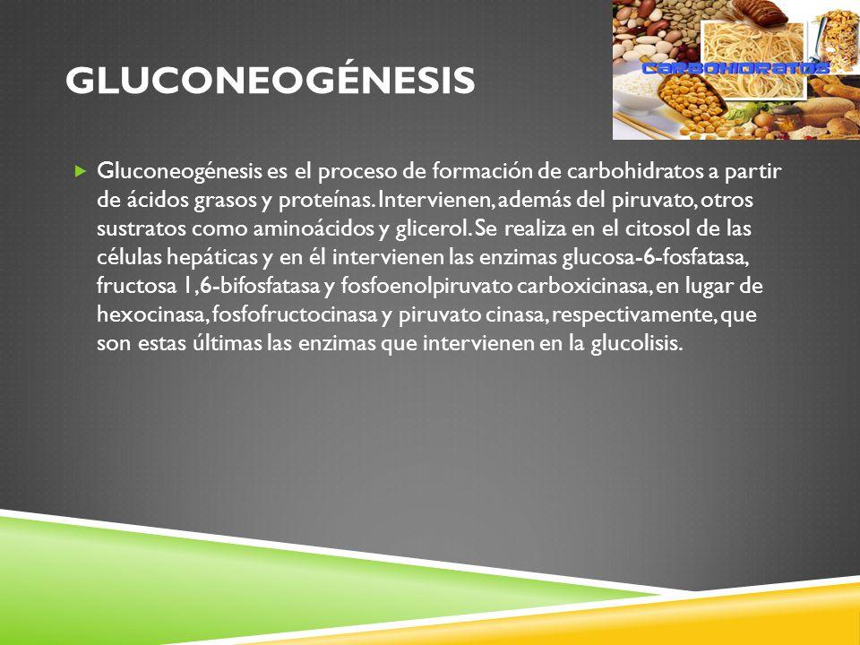 GLUCONEOGÉNESIS Gluconeogénesis es el proceso de formación de carbohidratos a partir de ácidos grasos y proteínas.