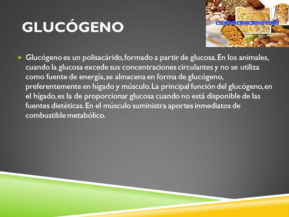 GLUCÓGENO Glucógeno es un polisacárido, formado a partir de glucosa.