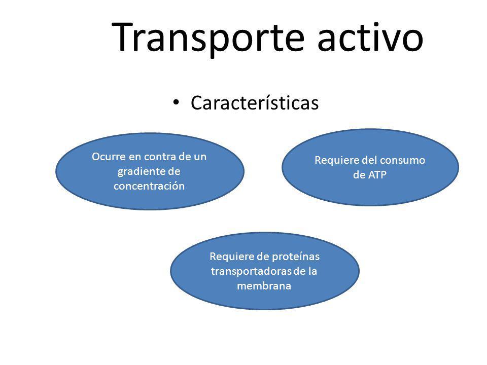 Transporte activo Características Ocurre en contra de un gradiente de concentración Requiere de proteínas transportadoras de la membrana Requiere del