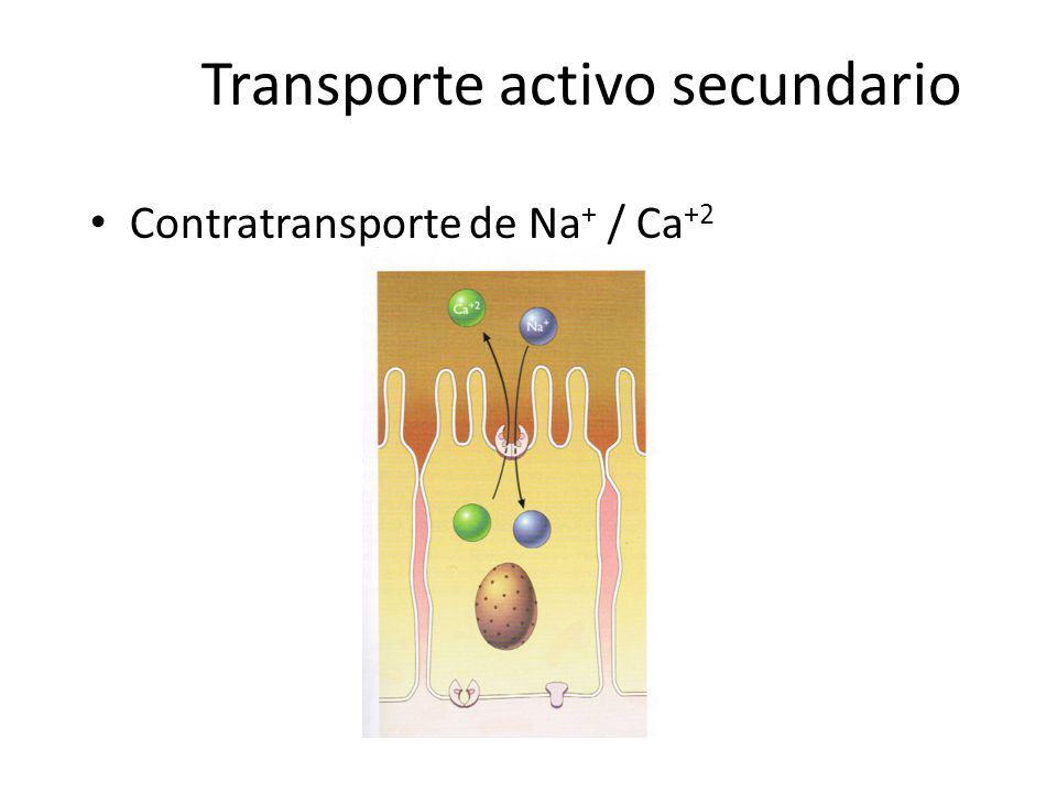 Transporte activo secundario Contratransporte de Na + / Ca +2