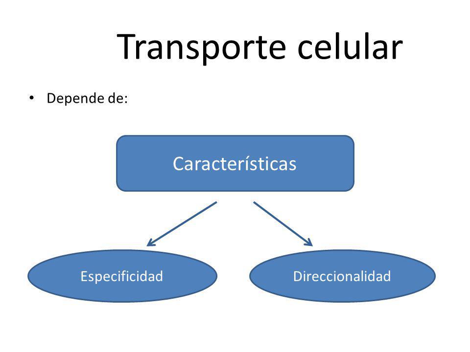 Transporte celular Depende de: Características EspecificidadDireccionalidad