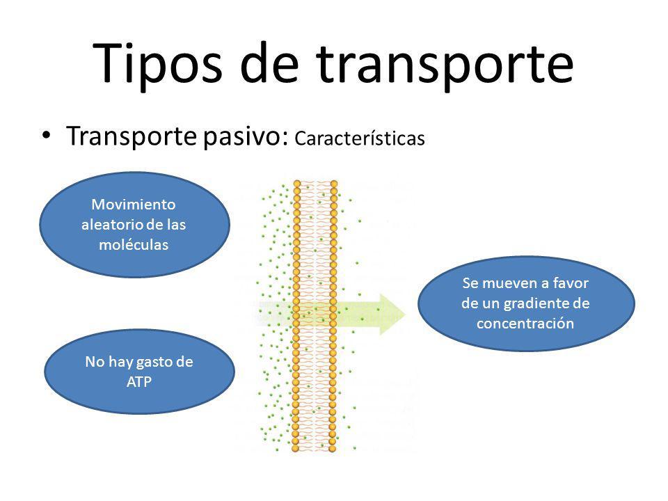 Tipos de transporte Transporte pasivo: Características Movimiento aleatorio de las moléculas Se mueven a favor de un gradiente de concentración No hay