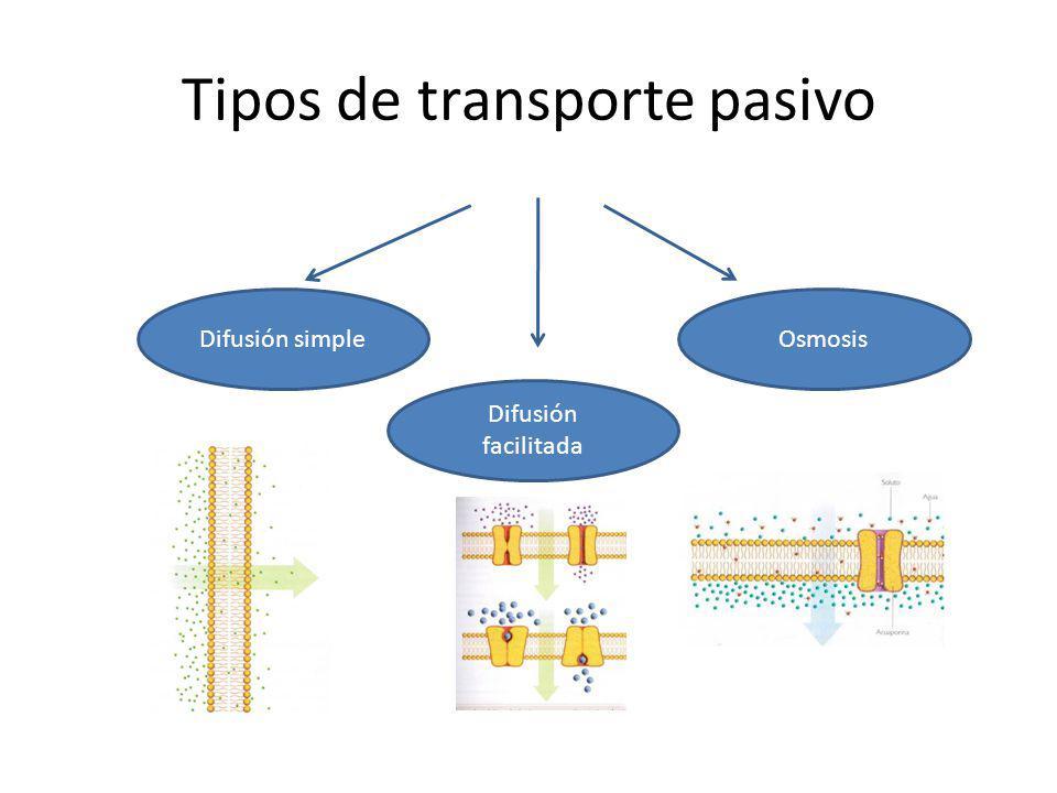 Tipos de transporte pasivo Difusión simple Difusión facilitada Osmosis