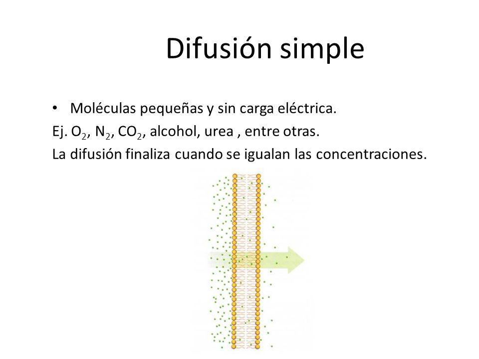 Difusión simple Moléculas pequeñas y sin carga eléctrica. Ej. O 2, N 2, CO 2, alcohol, urea, entre otras. La difusión finaliza cuando se igualan las c