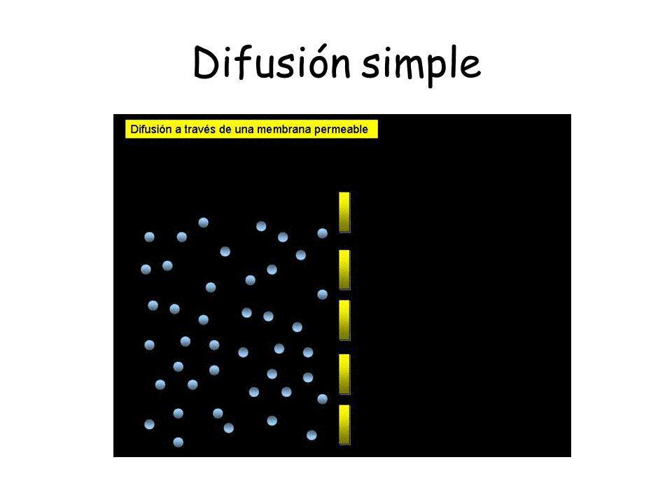 Difusión facilitada Las moléculas son transportadas a través de proteínas transmembranas que se encuentran en la membrana plasmática y de organelos.