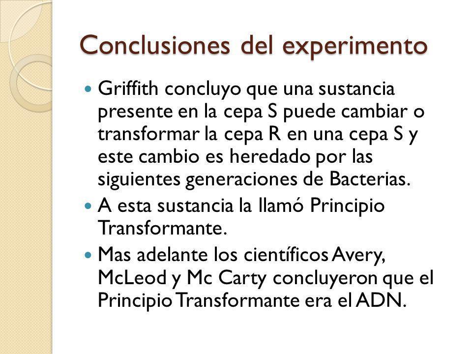 Conclusiones del experimento Griffith concluyo que una sustancia presente en la cepa S puede cambiar o transformar la cepa R en una cepa S y este cambio es heredado por las siguientes generaciones de Bacterias.