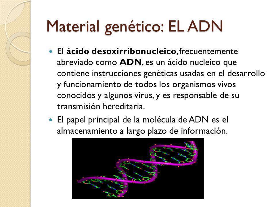 Material genético: EL ADN El ácido desoxirribonucleico, frecuentemente abreviado como ADN, es un ácido nucleico que contiene instrucciones genéticas usadas en el desarrollo y funcionamiento de todos los organismos vivos conocidos y algunos virus, y es responsable de su transmisión hereditaria.